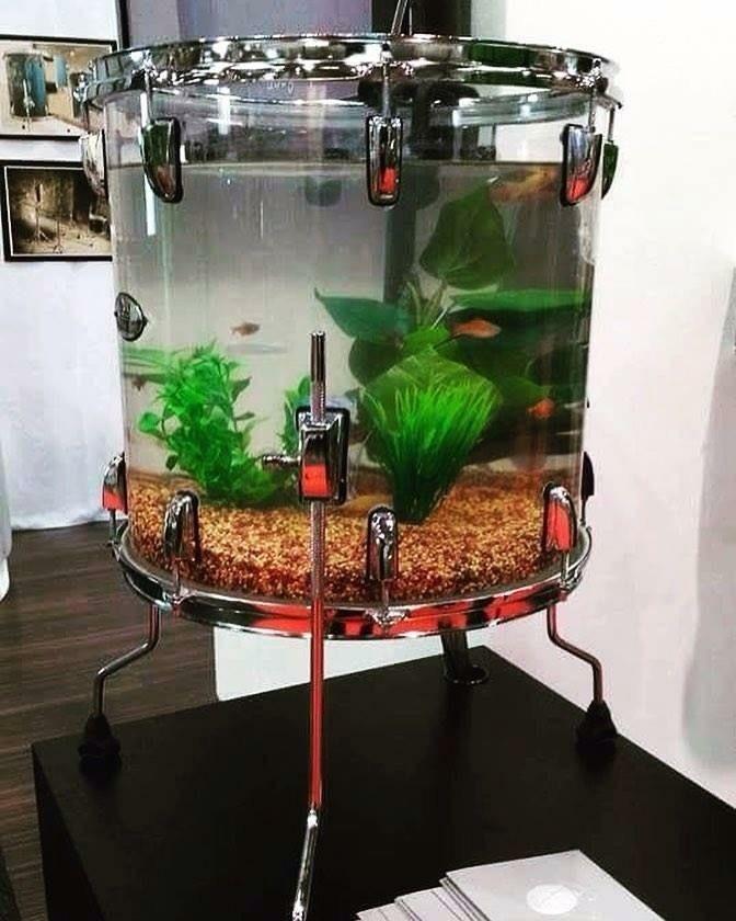 Aquarium in a drum
