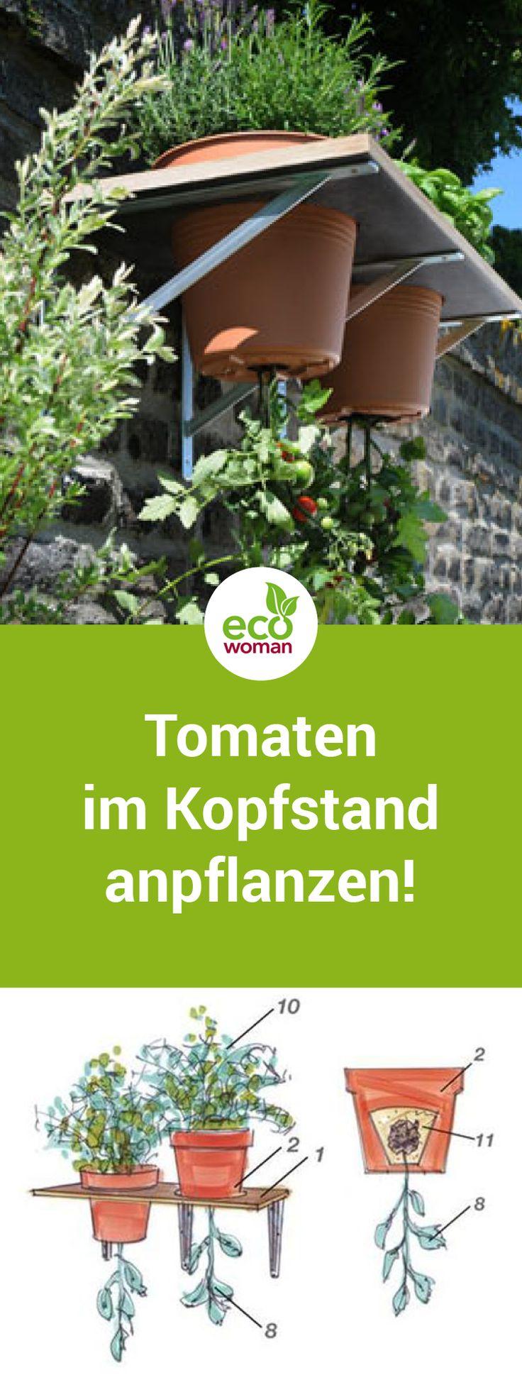 Schick und praktisch: Tomaten auf den Kopf stellen   – Gärtnern