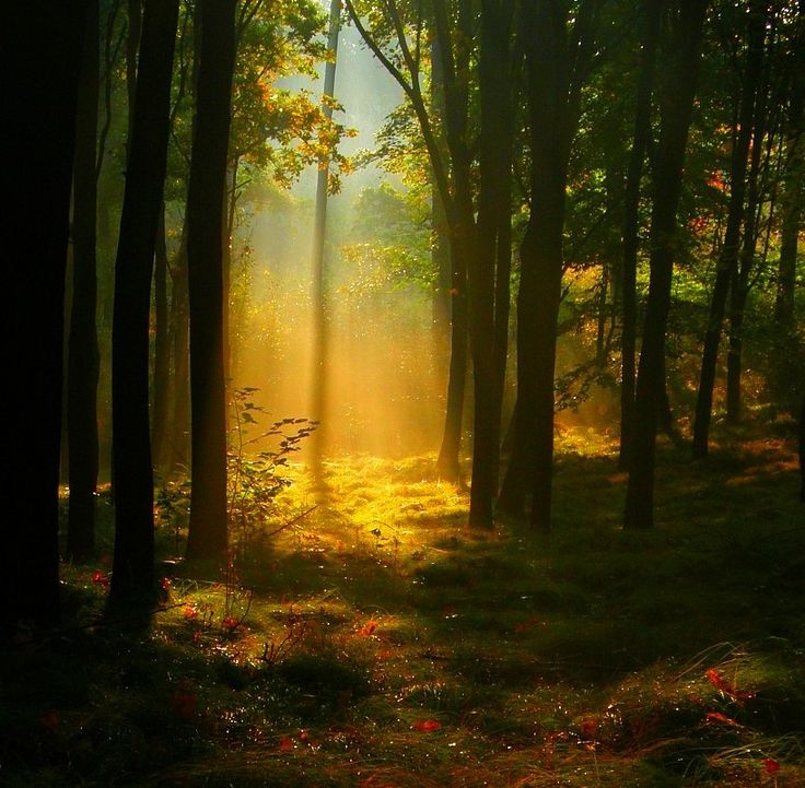 Enchanted Forest Background - Wallpapers Browse