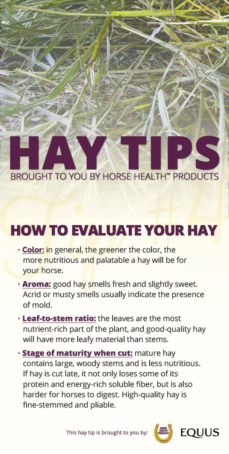 The way hay looks, smells and feels can tell you something about its quality. Here's how to evaluate your hay to be sure it's meeting all of your horse's nutritional requirements.  And don't forget, you can enter to win up to $10,000 worth of hay! >>http://bit.ly/EQ-Winter-Hay-Sweepstakes