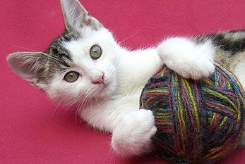 TODAY AUGUST 8, 2012 IS WORLD CAT DAY!!! Do something nice for your kitties!