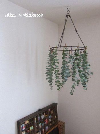 葉っぱの形が丸くて可愛らしいユーカリもドライフラワーに向いている植物です。  ドライフラワー用のラウンドハンガーに吊っておくと、趣きのある空間が作れそうです。