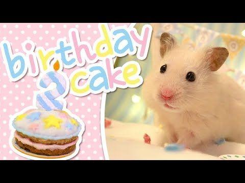 🎂 Birthday Cake | HAMSTER KITCHEN 🎂 – YouTube
