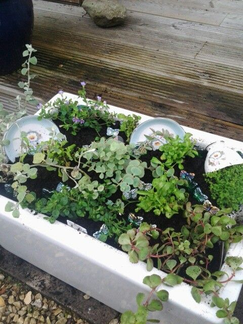 Belfast sink with alpines and crockery ♡