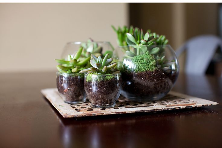 DIY terrariums. So cute and perfect for small dorm rooms!!