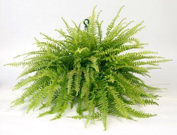 10 best venta de plantas de ornato plantas ornamentales for 10 plantas de ornato