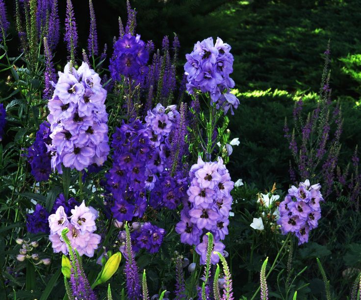Find out what your garden needs before the summer months come to an end.