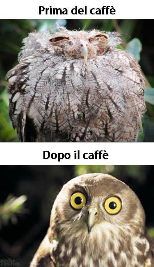 Prima del Caffè :