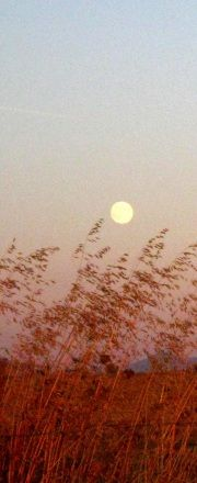 moonlit evening across fields