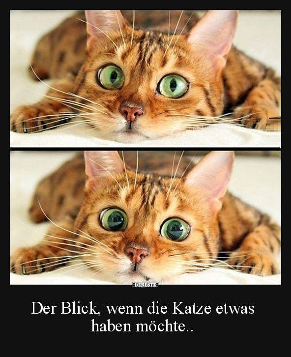 Der Blick, wenn die Katze etwas haben möchte.. | Lustige Bilder, Sprüche, Witze, echt lustig