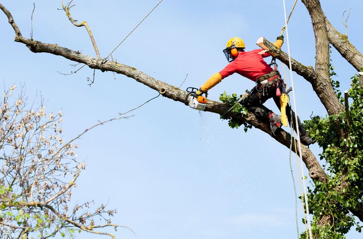 Treezy Tree Removal Services Brisbane Southside | Treezy Tree Services - Your Local Arborist Brisbane Southside  http://www.slideshare.net/TreezyPtyLtd/tree-removal-brisbane-southside-treezy-tree-services  #Treezy   #treezytreeservices #TreezyTreeRemovalServices #treezyTreeCare #treeRemoval #treeRemovalBrisbane #treeremovalBrisbaneSouthside #TreeRemovalServices #treeRemovalServicesBrisbane   #treeRemovalServicesBrisbaneSouthside