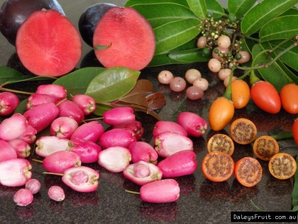 More Australian bush tucker food to grow