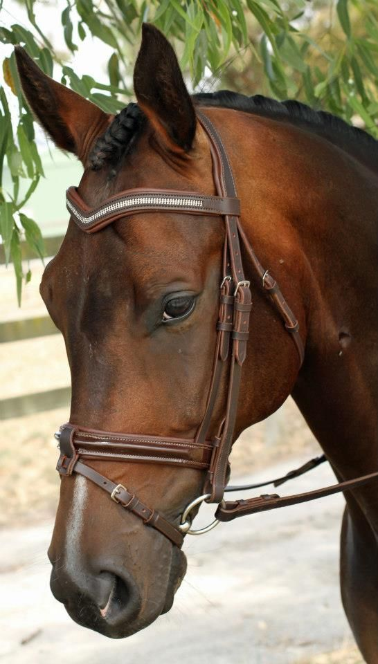 pride-riding:      Pretty bridle!