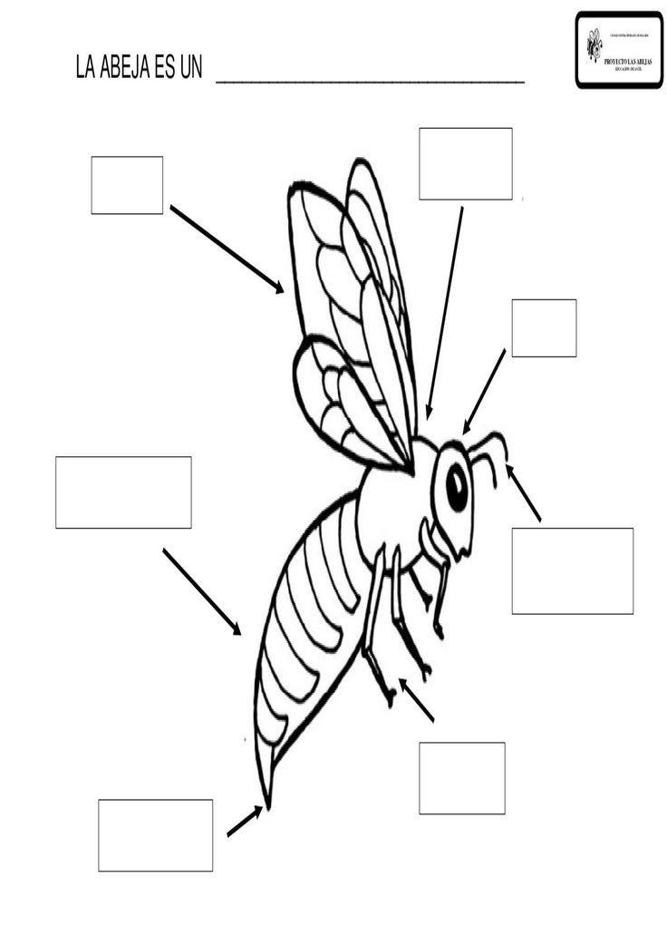 Ungewöhnlich Lebenszyklus Einer Honigbiene Arbeitsblatt ...