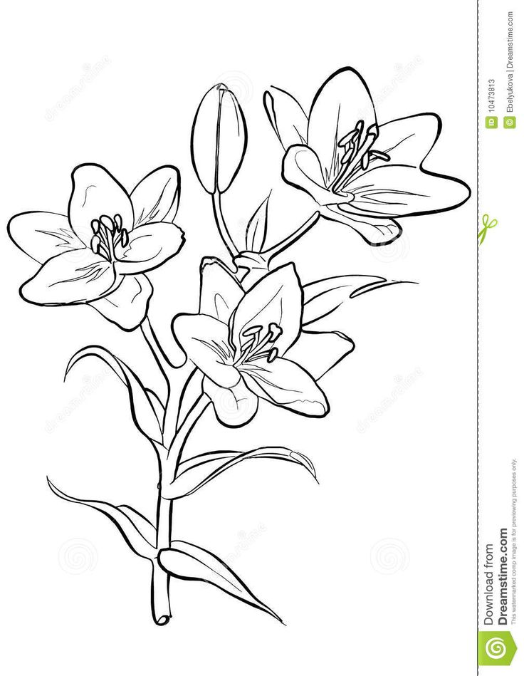 Drawing Lines Freehand : Best images about flowers on pinterest drawings