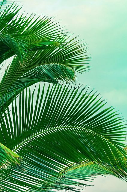 green palm leaves summer - photo #1