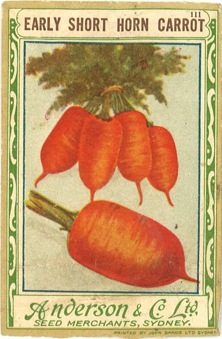 Seed packet cover with image of orange carrots.