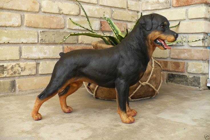 rottweiler x18 in l polyresin dog statue dogs. Black Bedroom Furniture Sets. Home Design Ideas