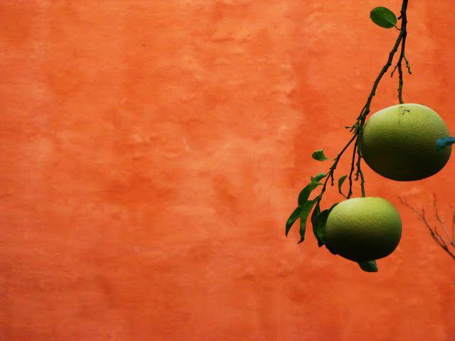 polly_nezjowy świat: donde frutas crecen por las calles