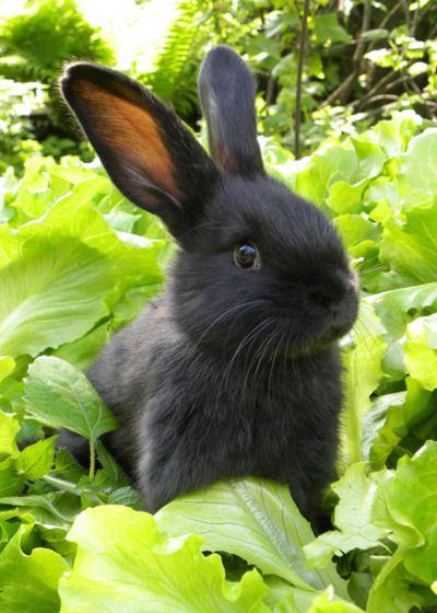 llbwwb:    For the Bunny Lovers :) by tamara.asliuk
