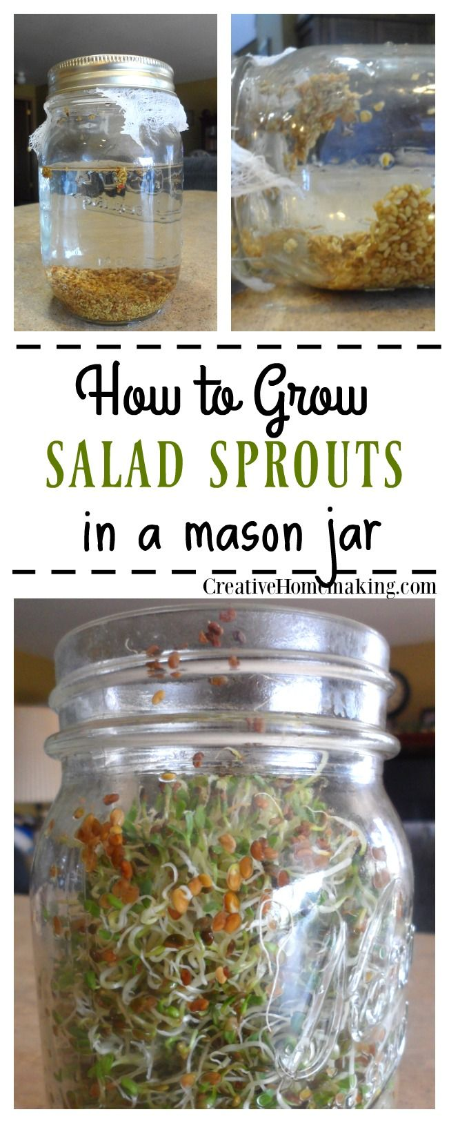 Easy instructions for growing your own salad sprouts from seed in a mason jar on the kitchen counter.