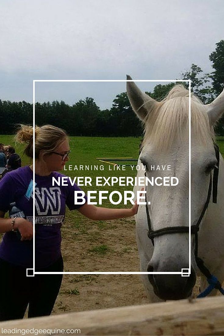 THE WORLD'S BEST CERTIFIED EQUINE-ASSISTED LEARNING COURSE. #leadingedge