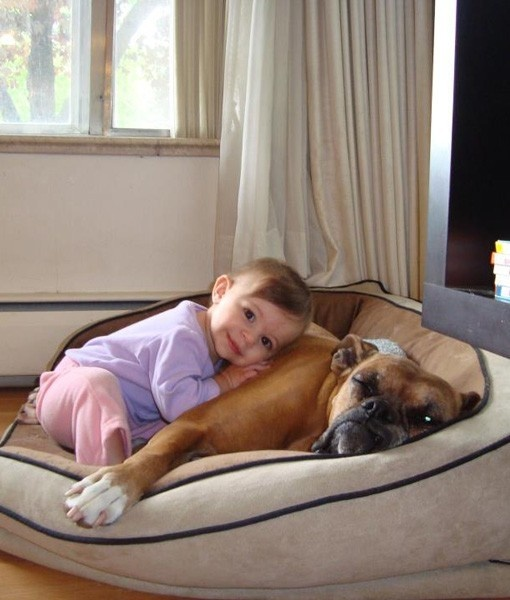 Best Dog Babysitters - PawNation