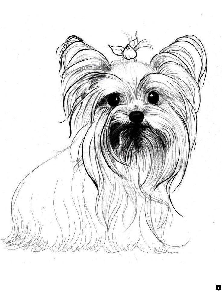 Картинку февраля, картинки йорка щенка для срисовки