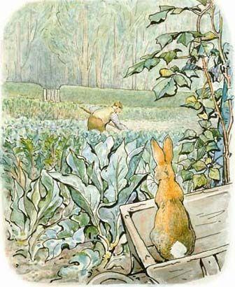 'The Tale of Peter Rabbit', 1902 -- Beatrix Potter. Peter Rabbit and Mr. McGregor in the vegetable garden.