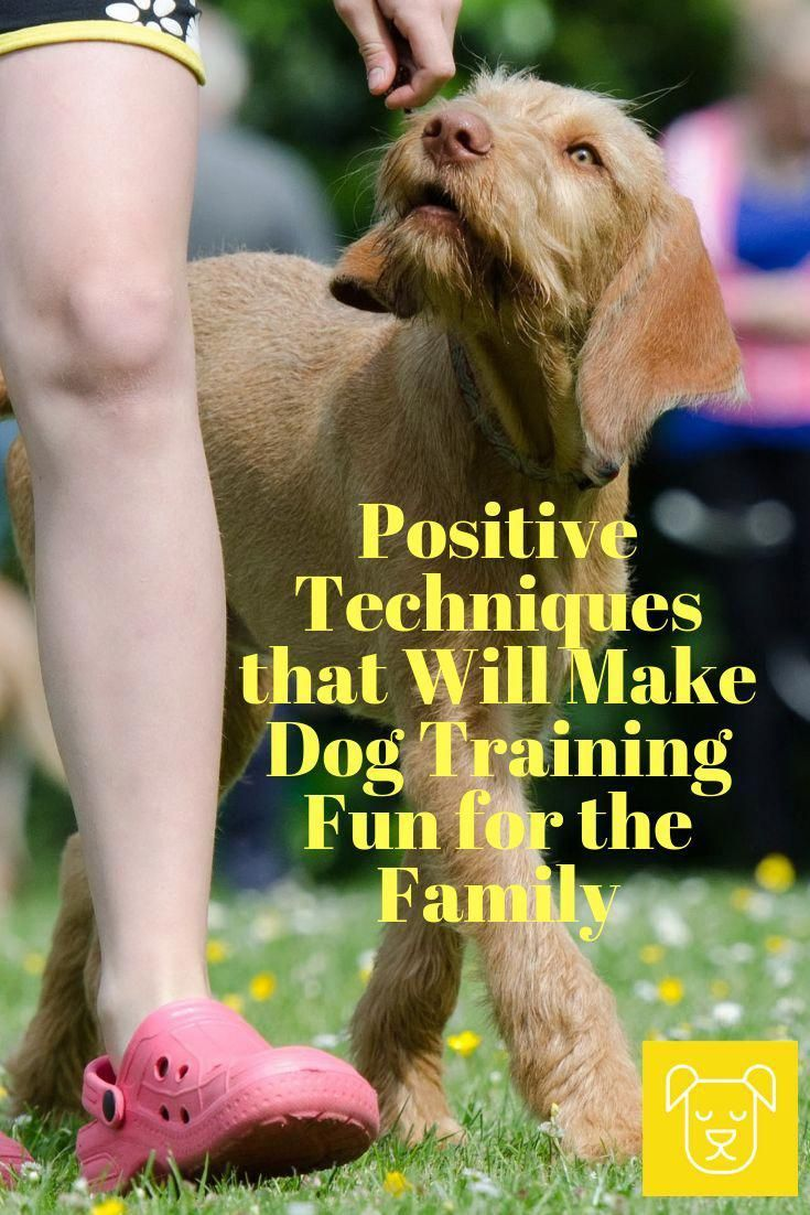 Every Home Animal Dog Need To Understand And Be Able To Follow At