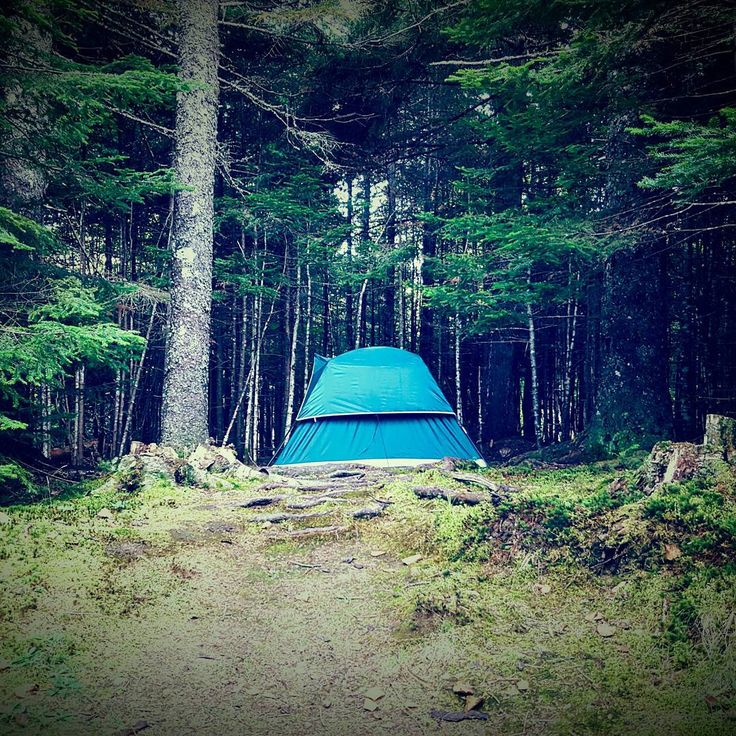 The path to freedom. Where I feel most at home. #solocamping #camping #freedom #nature #naturelovers #wilderness #begridless #gridlesslife #camplife #adventure #explorenb #explorecanada  Check out  @gridlesslife