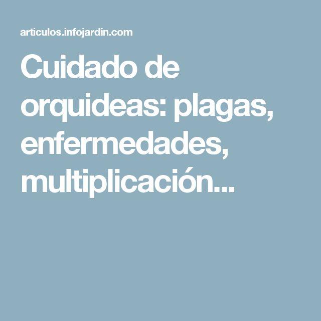 Cuidado de orquideas: plagas, enfermedades, multiplicación...