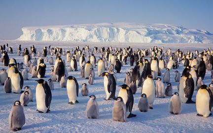 Adopt an Emperor Penguin from the World Wildlife Fund- during our study of global warming and Antarctica, start school campaign to adopt a penguin