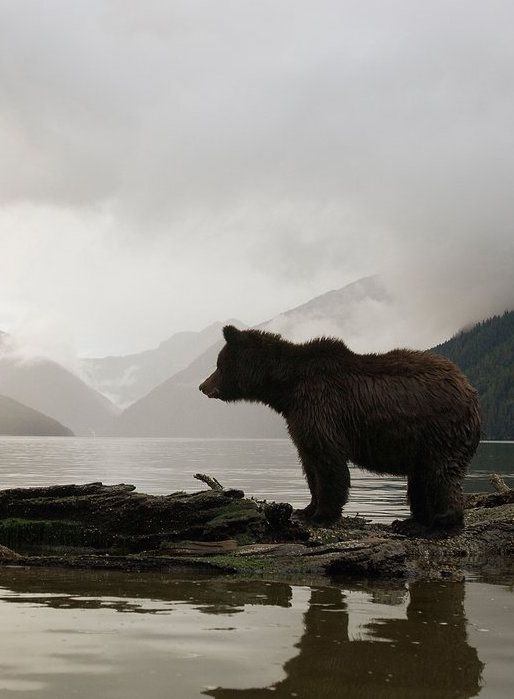 Spirit Bears and Sea Wolves: Is The Great Bear Rainforest Actually Magical?