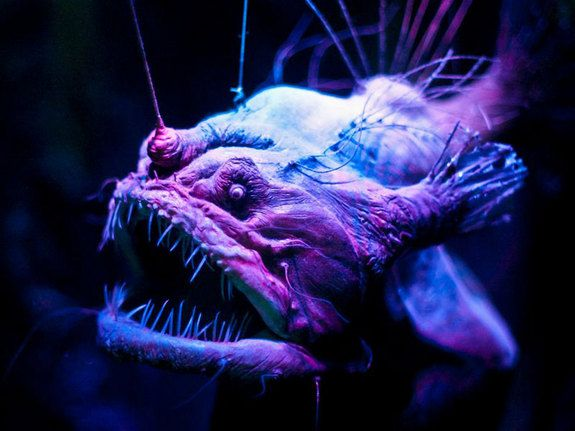 In photos spooky deep sea creatures the depths deep for Where do angler fish live