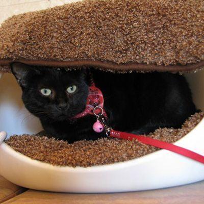 第8位 ジジ(掛川ターミナルホテル)全国の宿・ホテルの看板猫