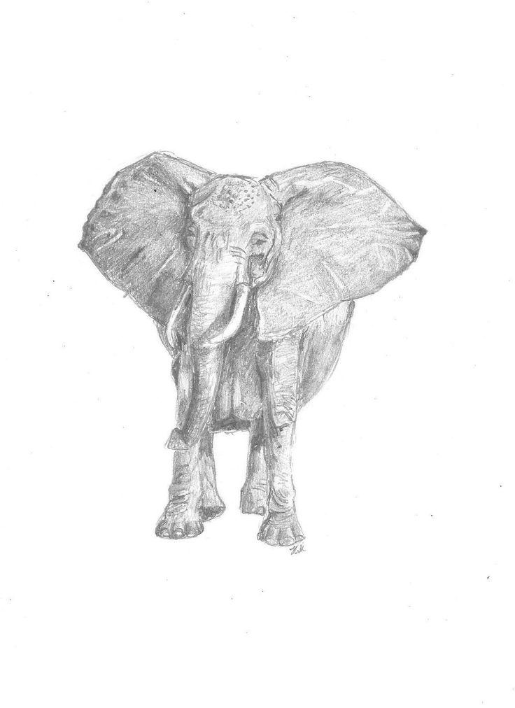 Elephant $25  Print, art, drawing www.petsbypencil.co.nz