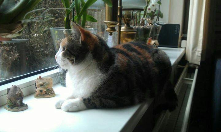 Watching birds outside