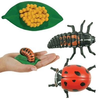 Lieveheersbeestjes levenscyclus.gif