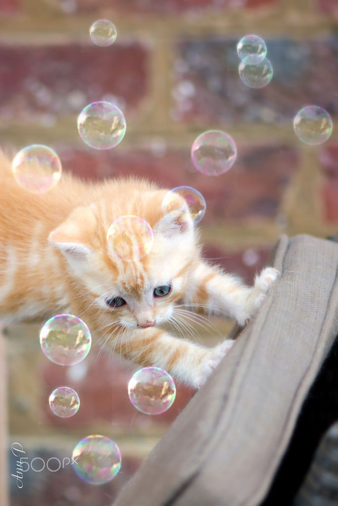 could I play with you...? by Ann P on 500px