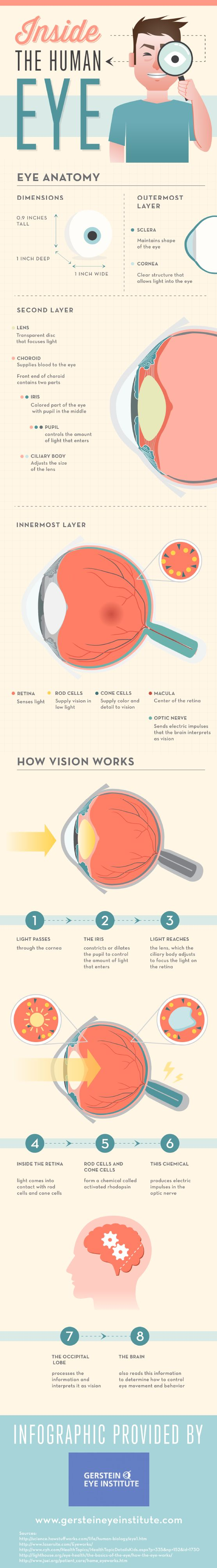 The retina is located in the innermost layer of the eye and senses light. Rod cells in the retina supply vision in low light, while cone cells in the