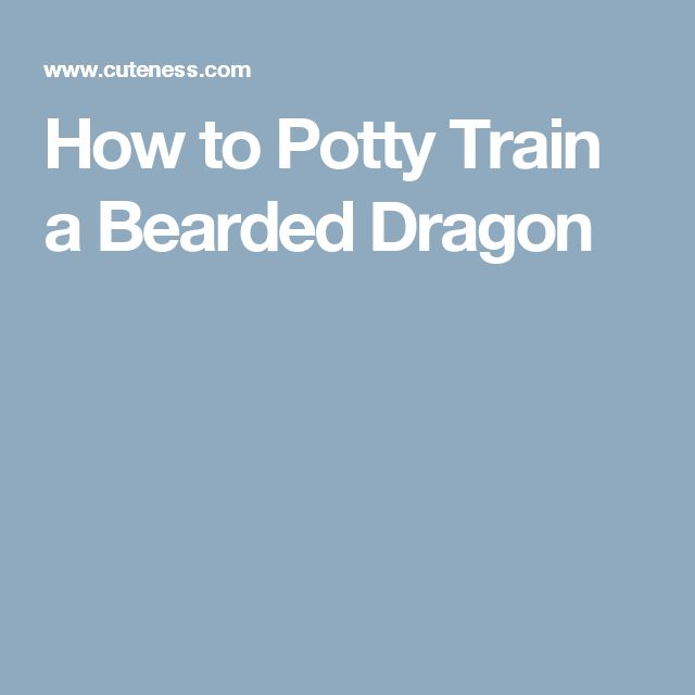 How to Potty Train a Bearded Dragon