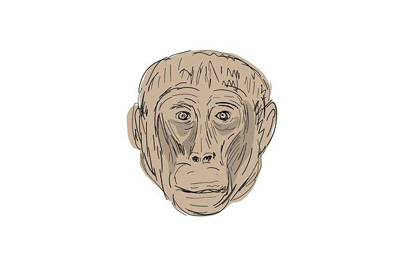 Gelada Monkey Head  Drawing by patrimonio on @creativemarket Illustration of a Gelada Monkey Head viewed from front done in hand sketch Drawing style. #illustration #GeladaMonkeyHead
