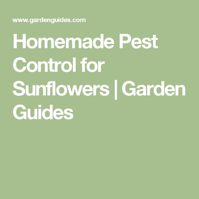Homemade Pest Control for Sunflowers |  Garden Guides