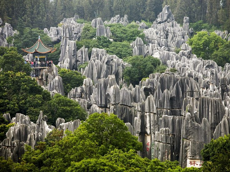 Jagged karst pillars of the Shilin Stone Forest poke through green treetops in the Yunnan Province near Kunming, China [Photo by Gonzales Photo, Carsten Fjellerad/Corbis]