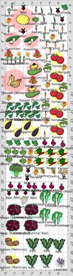 Vegetable Garden Layout - Sample Companion Planting Design