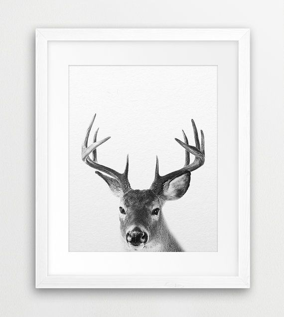 Hey, I found this really awesome Etsy listing at https://www.etsy.com/listing/262420718/deer-print-deer-photography-black-and