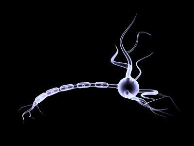 Detoxikácia organizmu - Vyžeňte z tela parazity a zmeníte svoj život k lepšiemu - EZOpress