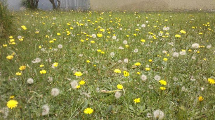 Twitter / ecologicare: #Bogotaniando primavera en Bogotá !!!!!