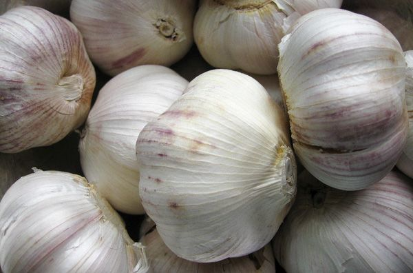 how to preserve garlic. canning garlic in your pressure canner.